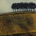 yellow furrows